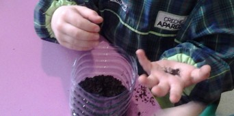Germinação de sementes